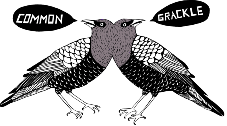 GREAT DEPRESSION | Common Grackle