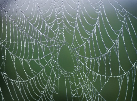 WEAVING WEBS | Big Spider's Back